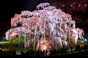 滝桜の写真素材 [FYI00217118]