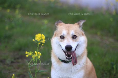雨上がりの犬の写真素材 [FYI00217417]