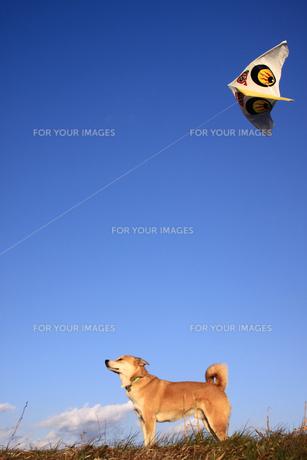 犬と凧揚げの写真素材 [FYI00217422]