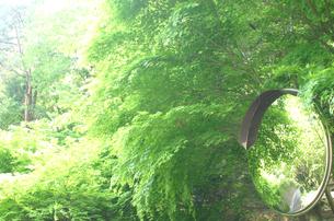 緑のもみじとカーブミラーの写真素材 [FYI00217527]
