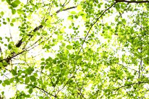 新緑の写真素材 [FYI00217546]