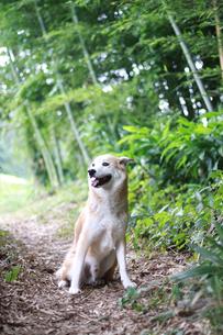 犬と夏の散歩道の写真素材 [FYI00217582]