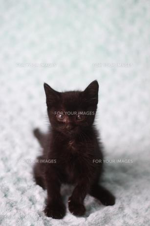 座っている黒い子猫の素材 [FYI00217734]