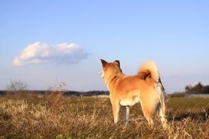 遠くを見つめる犬の後姿の写真素材 [FYI00218015]