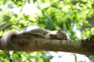 木上のリスの写真素材 [FYI00218125]