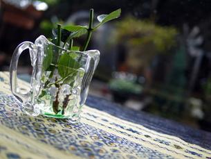 ガラスの器とアジサイの葉の写真素材 [FYI00218157]