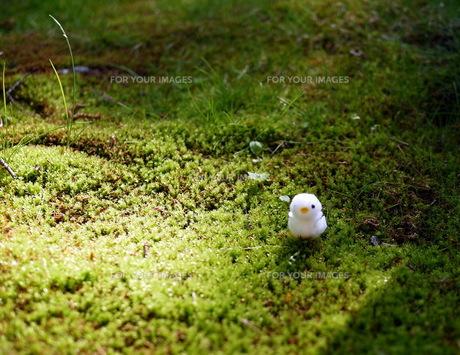 苔の上にあるひよこの人形の写真素材 [FYI00218160]