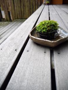 テラスに置かれた苔玉の写真素材 [FYI00218180]