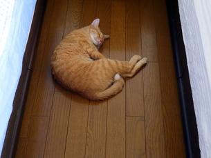 ベッドの間の猫の写真素材 [FYI00218206]