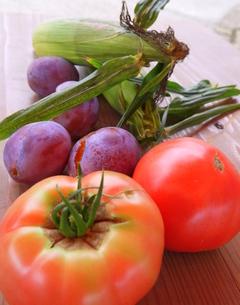 トマト狩りの収穫の写真素材 [FYI00218252]