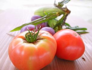 トマト狩りの収穫の写真素材 [FYI00218258]