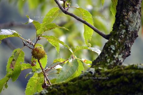 木の実の素材 [FYI00218261]