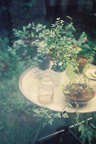 庭に置かれたテーブルの上の植物たちの素材 [FYI00218343]