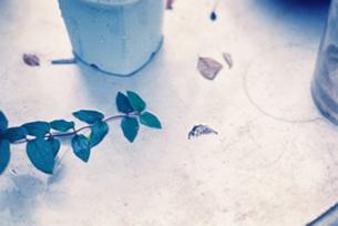 庭に置かれたテーブルの上の写真素材 [FYI00218353]