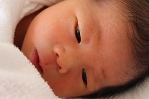 赤ちゃんの写真素材 [FYI00218385]