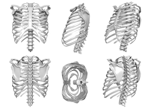 骨の写真素材 [FYI00218410]