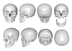骨の写真素材 [FYI00218411]