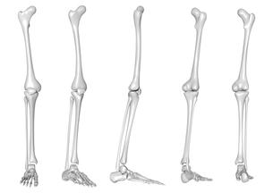 骨の写真素材 [FYI00218424]