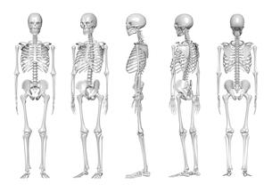 骨の写真素材 [FYI00218427]