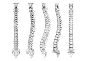骨の写真素材 [FYI00218431]