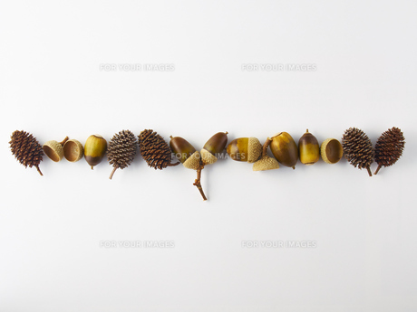 ドングリと木の実の写真素材 [FYI00218543]