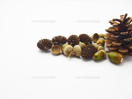 木の実と松ぼっくりの写真素材 [FYI00218556]