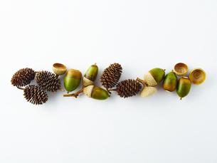 ドングリと木の実の写真素材 [FYI00218564]