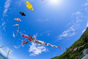 大空を泳ぐ鯉のぼりの写真素材 [FYI00218621]