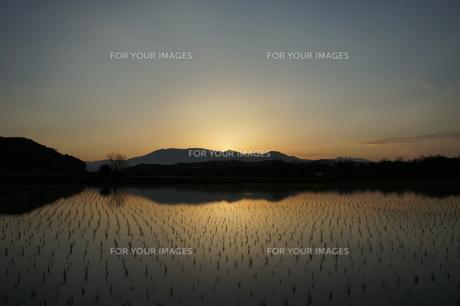 田植えと蔵王の写真素材 [FYI00219282]