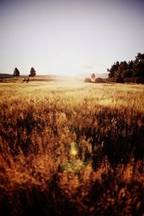 草原の日の入りの写真素材 [FYI00219353]