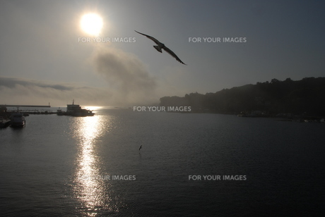 気仙大島 夕方の海の写真素材 [FYI00219355]