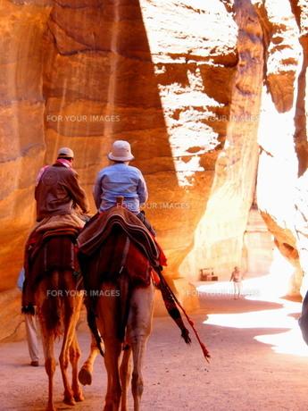 ペトラのシークをラクダで進む観光客の写真素材 [FYI00219366]