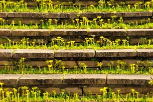 階段に咲く花の写真素材 [FYI00219398]