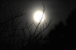 満月と小枝の写真素材 [FYI00219486]