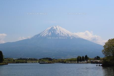 富士山と田貫湖の写真素材 [FYI00219490]