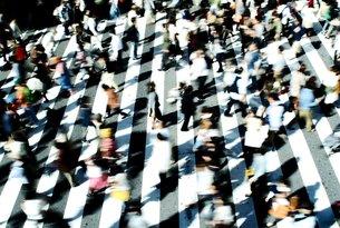 横断歩道の写真素材 [FYI00219509]