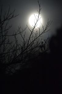満月と小枝(縦)の写真素材 [FYI00219514]