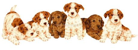 可愛い犬集合の写真素材 [FYI00219538]