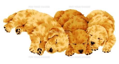 眠る犬の写真素材 [FYI00219549]