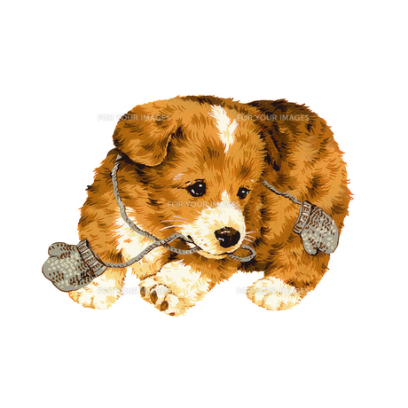 手袋で遊ぶ犬の写真素材 [FYI00219574]