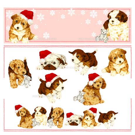 イヌとクリスマスの写真素材 [FYI00219575]