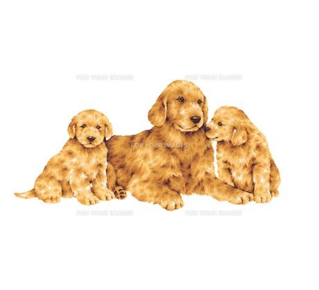親子犬の写真素材 [FYI00219579]