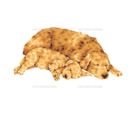 眠る犬の写真素材 [FYI00219586]
