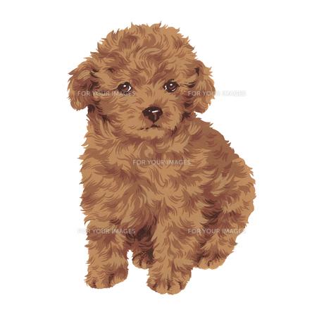 可愛い犬の写真素材 [FYI00219612]
