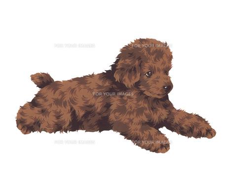 可愛い犬の写真素材 [FYI00219619]