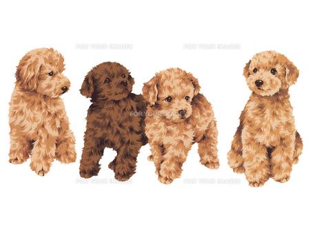 カワイイ犬  の写真素材 [FYI00219628]