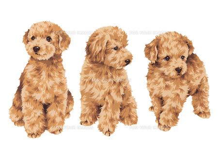 カワイイ犬  の写真素材 [FYI00219630]