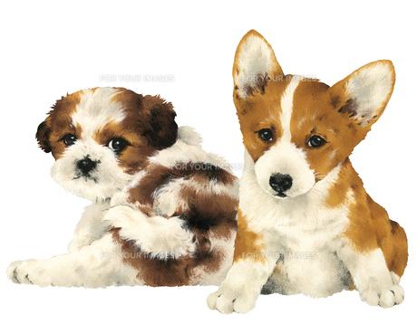 カワイイ犬の写真素材 [FYI00219636]