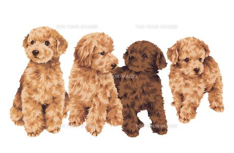 可愛い犬の写真素材 [FYI00219638]