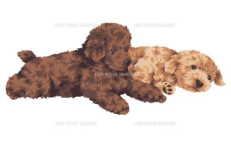可愛い犬の写真素材 [FYI00219640]